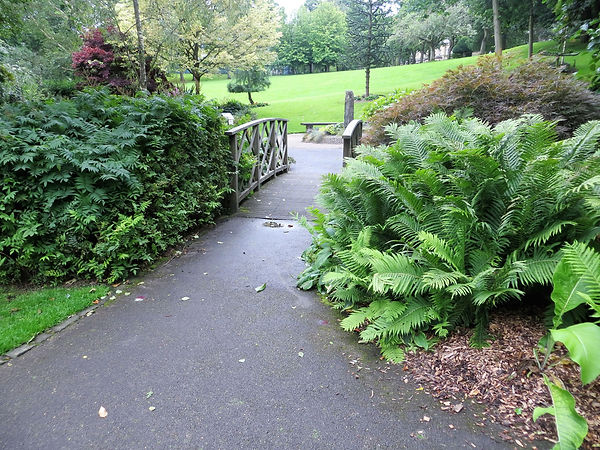 Ferns by bridge lister park bradford uk