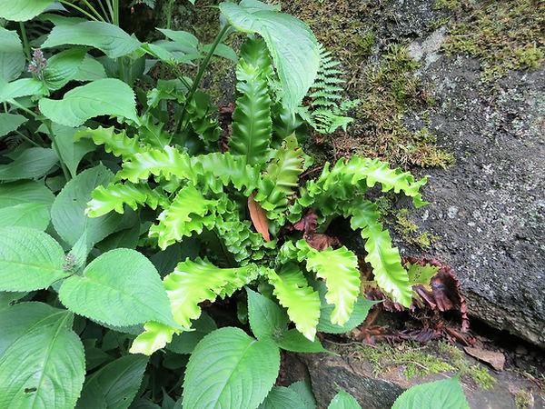 Botanical garden  fern