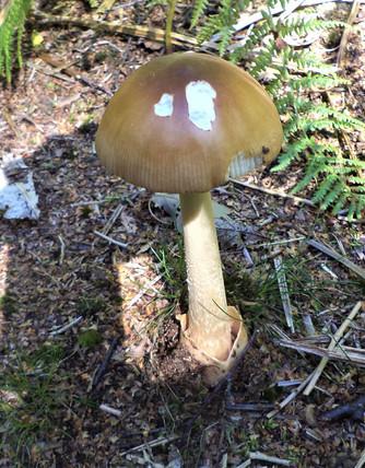 Shipley glen fungi.jpg