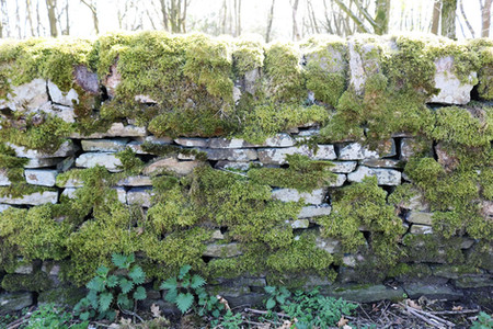 Dry stacked stone wall with moss