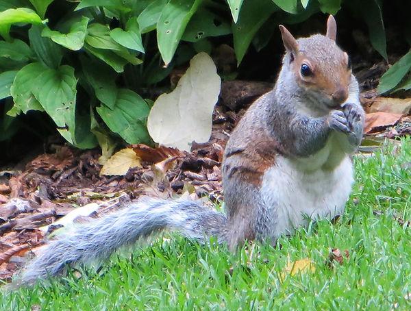 Squirrel Botanical garden