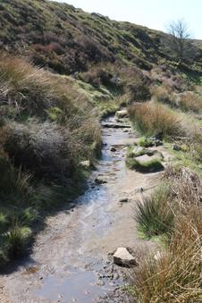 Wet path.jpg