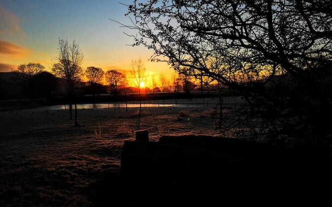 Tree sillouete Sunrise Silsden