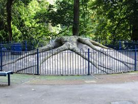 Fossilised tree stump Lister park