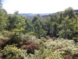shipley glen landscape view.jpg