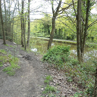 Path through woods along side canal