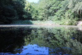shipley glen dam.jpg