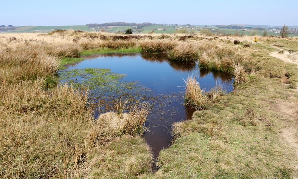 Froth pond Haworth moor