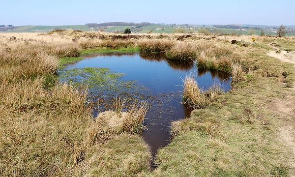 Moor pond.jpg