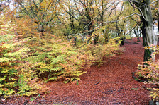 Judy wooods autum trail.jpg