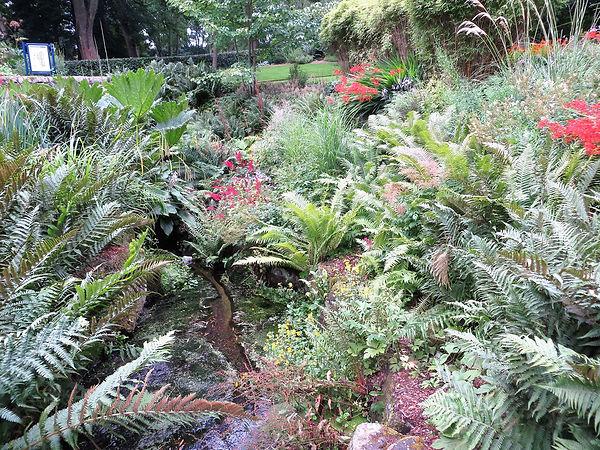 Ferns and stream lister park bradford