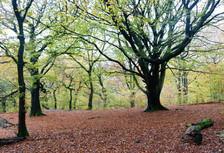 Judy woods Bradford west yorkshire.jpg