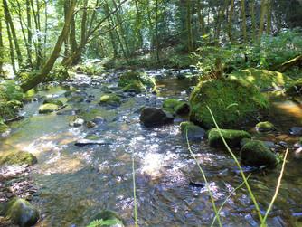 shipley glen stream.jpg