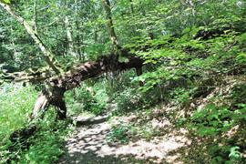 trench woodlands.jpg
