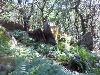 shipley glen rocks 2.jpg