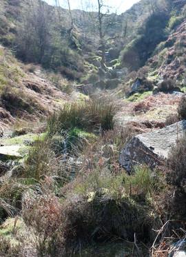 Path of bronte falls.jpg