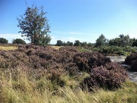 shipley glen landscape.jpg