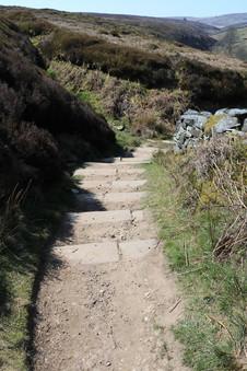 Steps to falls.jpg