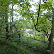 trees buck woods