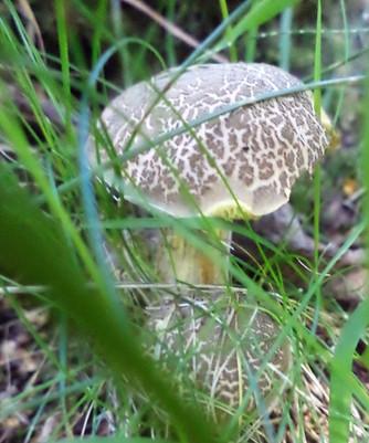 shipley glen wild mushroom.jpg