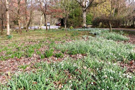 Darwin Gardens Ilkley