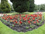 Wibset park Bradford flower bed