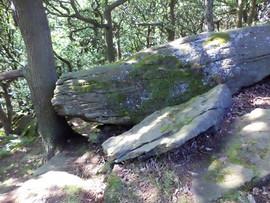 shipley glen rock against tree.jpg