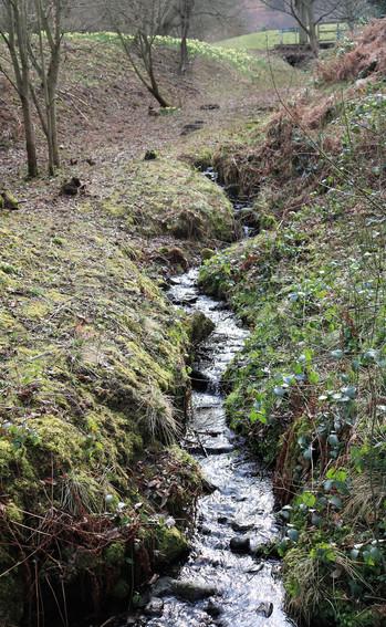Darwin gardens stream