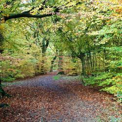 Judy woods Bradford