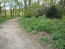 Path through buck woods Thackley