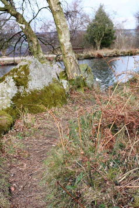 Tree overlooking Ilkley Tarn