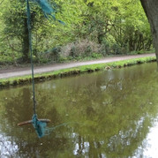 swing rope hanging from tree over canal