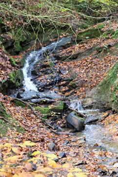 Judy woods bradford stream 1.jpg