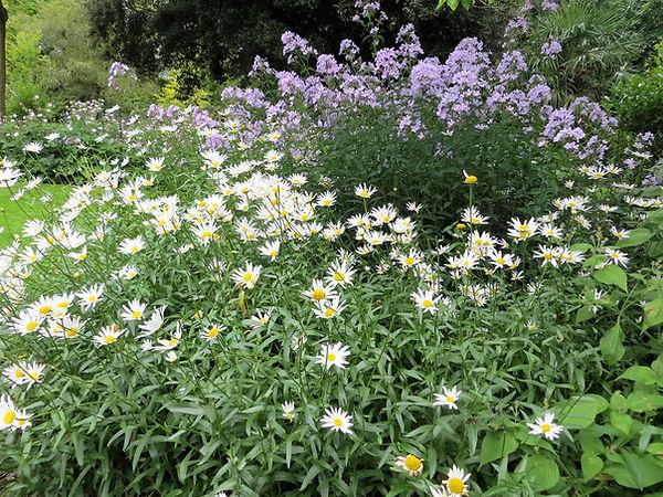 Flower bed Botanical garden
