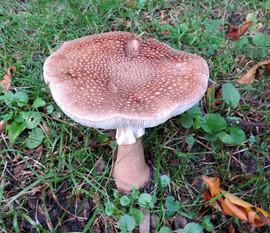Fungi Lister Park Bradford