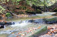 Judy woods Bradford stream.jpg