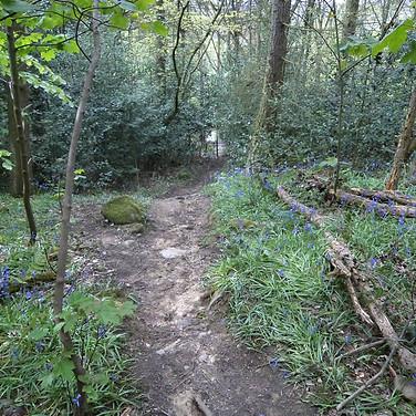 Muddy path through woods