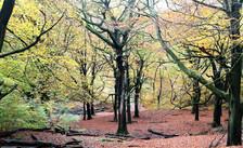 Judy woods Bradford Trail.jpg