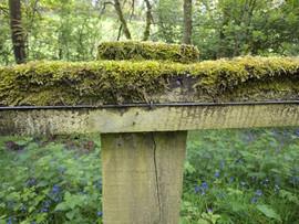 Moss on fence Buck Woods Thackley Bradford