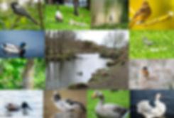 Bradford Birding Birds