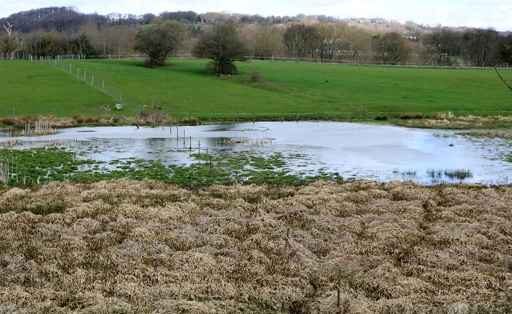 Flooded field at side of pond with a Heron