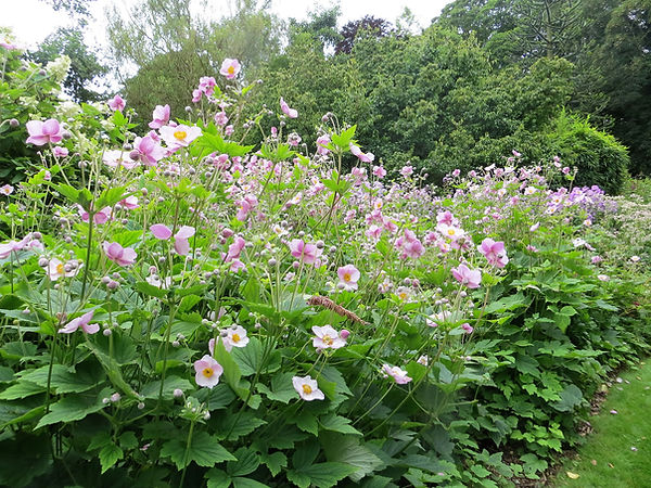 Botanical garden flower bed