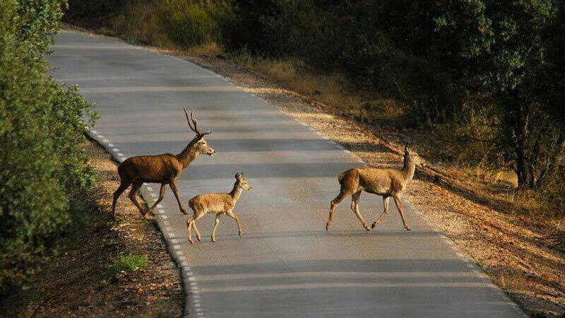 Escapada Rural para Tres personas en Cáceres