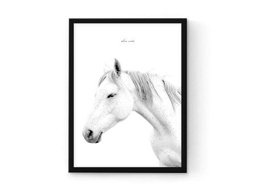 הדפס סוס לבן