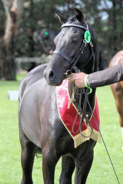 C Reserve Led pony 2
