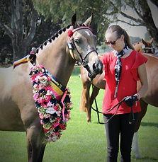 C Pony champ 5.jpg