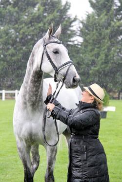 C Event horse