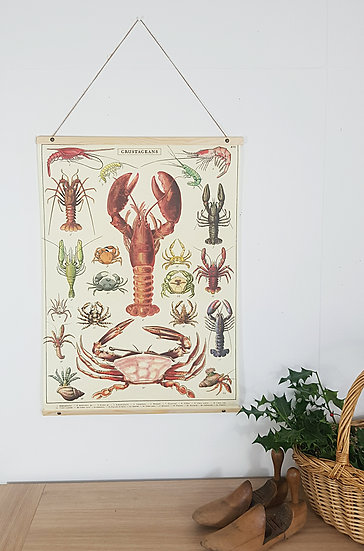 Vintage Style Poster - Crustacean - Wall Hanging