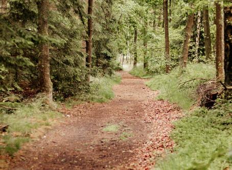 Blogserie Shootinglocation - # 2 Der Wald in Quickborn