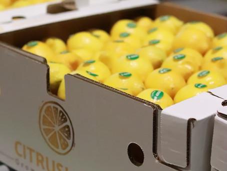 Limones Citrus Love